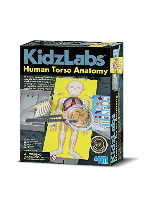 4M emberi torzó anatómiája készlet