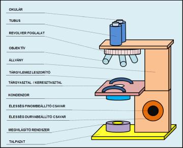 Mikroszkóp gyerekeknek